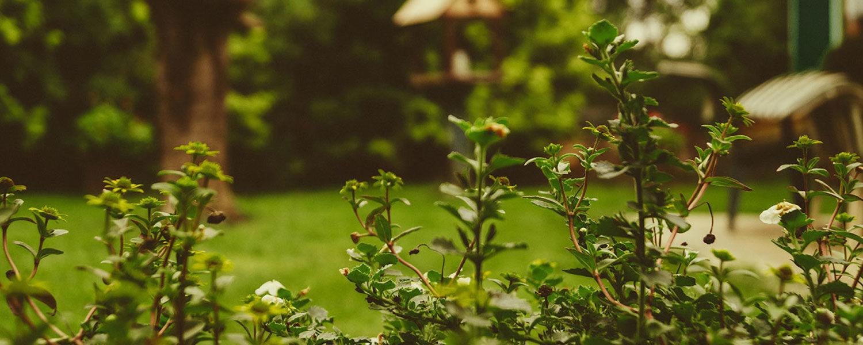 Barkhoff Co Gmbh Ihr Garten Und Landschaftsbauer Aus Essen